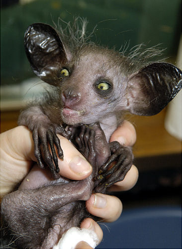 Maine Auto Mall >> The ugliest animals in the world