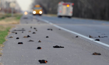 Dead birds on a street of Lousiana, US (AP)