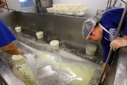 Manager Amy Marcoot (left) and her sister Brooke Segrest empty a vat of curds as they make havarti cheese at Marcoot Jersey Creamery in Greenville, Illinois, on Nov. 29, 2010. (St. Louis Post-Dispatch/MCT)