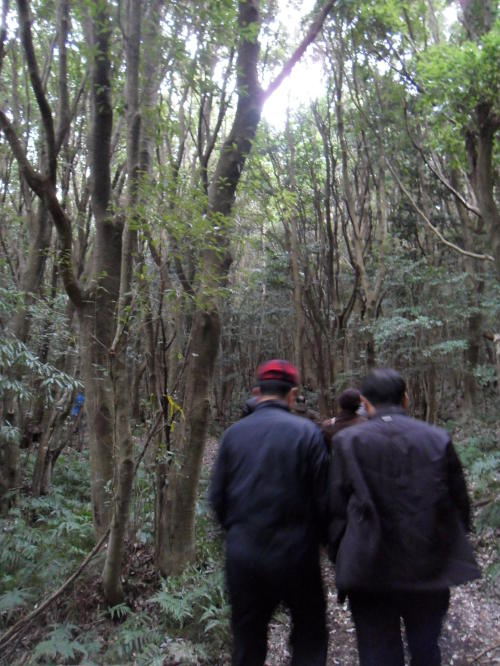 Reporters walk in the Sunheul Gotjawal Forest on Jeju Island on Jan. 13.(Kim Yoon-mi/The Korea Herald)