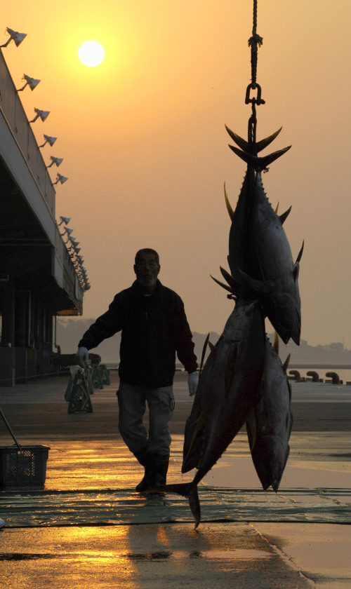 Five fresh tuna are hooked after arriving at Shiogama port, Miygagi Prefecture, northeastern Japan, Thursday. (AP-Yonhap News)