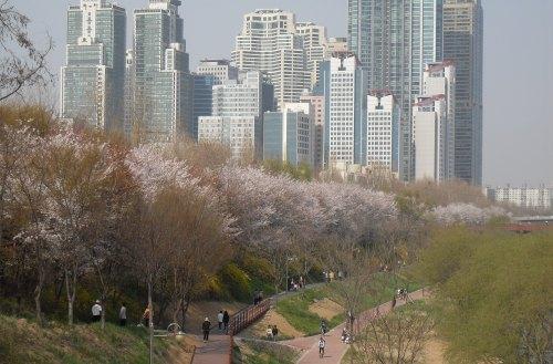 Walking paths along the Yangjae Stream taken on April 17. (Gangnam District Office)