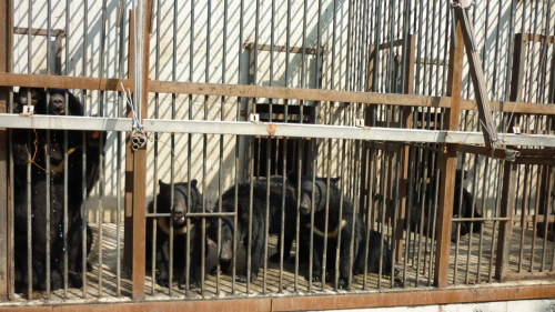 Picture taken by a campaigner of bears at a farm off the road from Jincheon to Cheonan. (Marcela Meidinger)