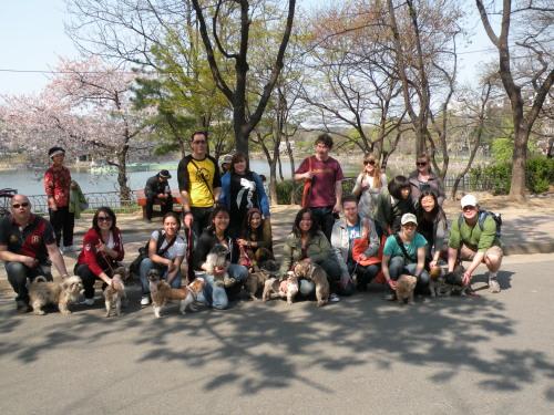 A previous Daegu dog walk organized by the Korean Animal Protection Society. (KAPS)