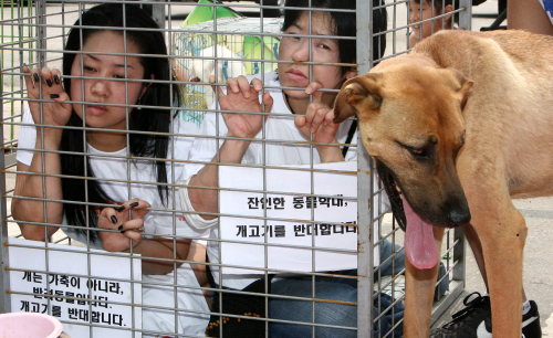 Animal rights activists protest the consumpt ion of dog meat in Seongnam, Gyeonggi Province. (Yonhap News)