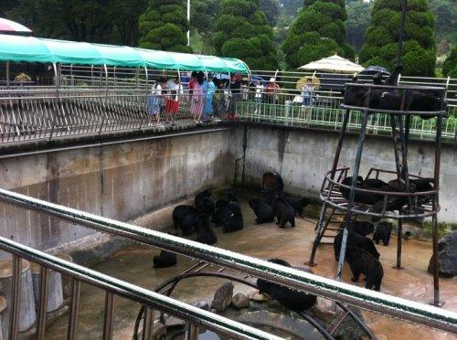 A bear enclosure at Bear Tree Park in Chungchondong. (Belynda Azhaar)