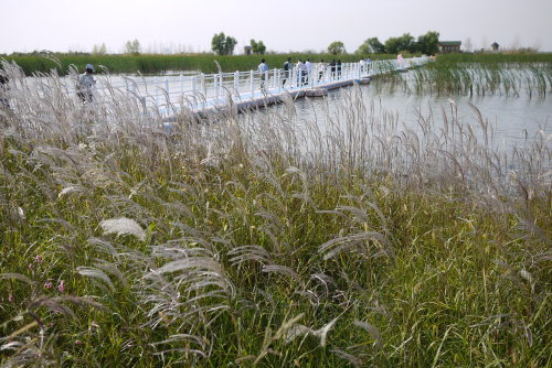 Binjiang Wetland, Harbin's largest and newest wetland, offers a unique ecological vista. (Yang Sung-jin/The Korea Herald)