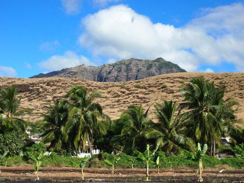 Organic farms in west Oahu, Hawaii. (Kim Myun-joong)