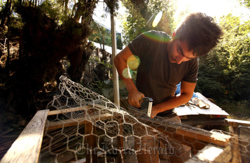 Simon Saaid, 21, from France, works on a building project as a visiting WWOOFer at ArtFarm in Santa Barbara, California, on July 20. (Los Angeles Times/MCT)