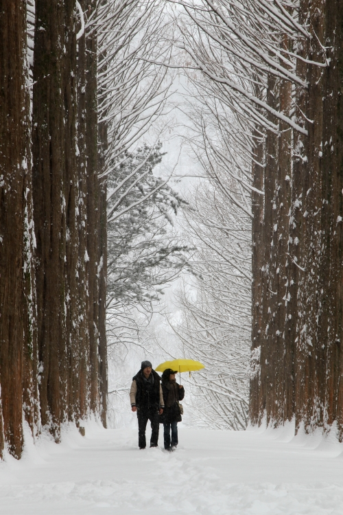 A couple walks down the snow-covered metasequoia path on Nami Island, Gangwon Province. (Nami Island)