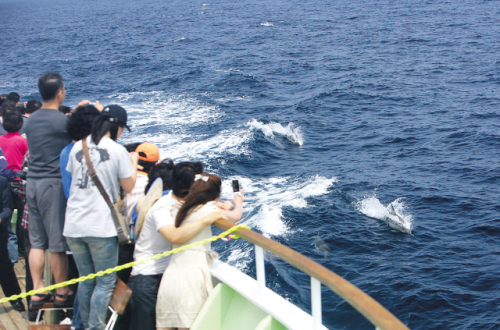 People watch dolphins from a cruise ship from Jangsaengpo Port, Ulsan. (Whale Cultural Foundation)