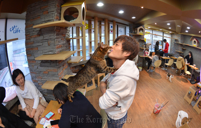 Customers cuddle with cats at Cat Attic Caf in Myeongdong, Seoul. (Lee Sang-sub/The Korea Herald)