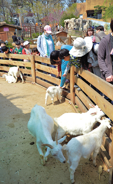 Visitors at the zoo observe a goat. (Kim Myung-sub/The Korea Herald)
