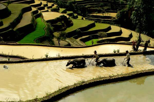 The rice terraces the Hani people have cultivated for about 1,300 years are now a World Heritage site. (China Daily)