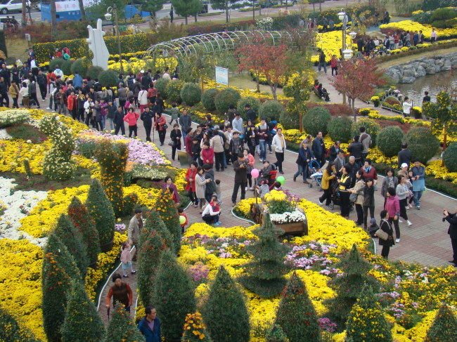 Visitors walk around the chrysanthemum park in Iksan during the Ten Million Chrysanthemum Festival last year.(Ten Million Chrysanthemum Festival)