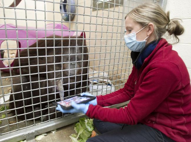 Jill the orangutan explores an iPad app with assistant zoo supervisor Courtney Murray. (AP-Yonhap News)