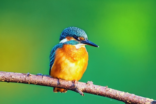 The beak of the kingfisher was mimicked to stop a noise problem with high-speed trains. (123rf)