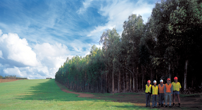 Hansol Homedeco and Ngati Porou Whanui Forests have been jointly developing this radiata pine tree forest in New Zealand for two decades. (Hansol Homedeco)