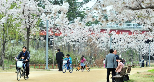 Visitors enjoy the cherry trees in bloom at Seoul Forest in Seongdong-gu, Seoul. (Korea Herald file photo)