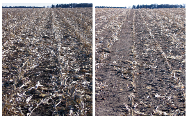 This combo photo, provided by the University of Nebraska-Lincoln, shows corn residue after grain harvest (left) and a field section where corn residue was baled and removed after grain harvest. (AP-Yonhap)