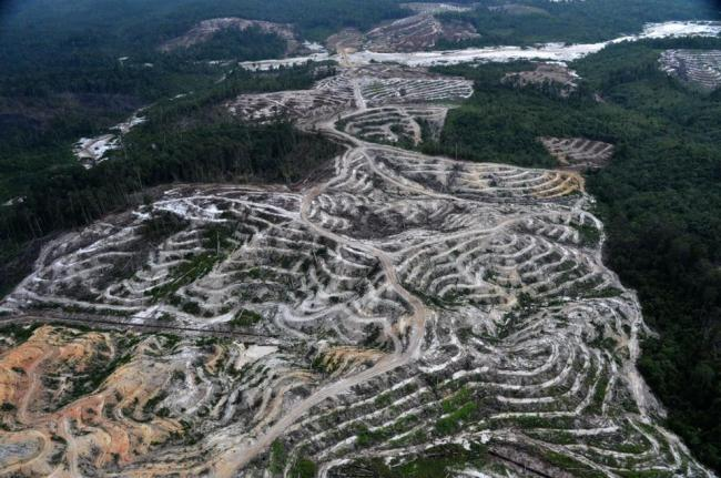 This photograph taken on Feb. 24, during an aerial survey mission by Greenpeace in Central Kalimantan province on Indonesia's Borneo Island, shows deforestation to make way for a palm oil plantation in a Borneo forest. (AFP)