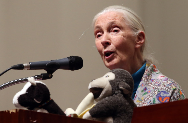 British primatologist Jane Goodall speaks during a lecture at Ewha Womans University on Tuesday. (Yonhap)