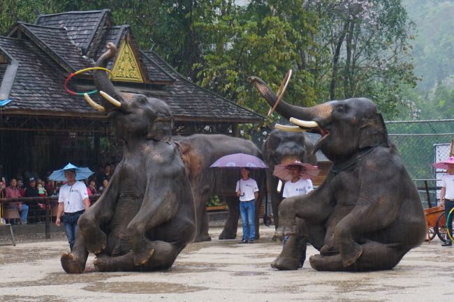 Elephant circus at the Wild Elephant Valley