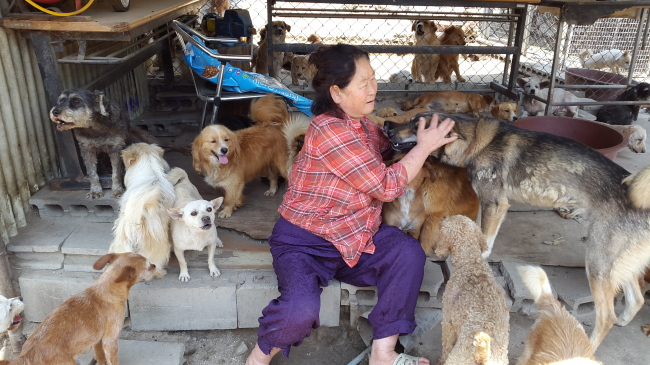 Kong Kyung-hee, head of animal shelter Aerinwon, pets dogs around her inside the shelter, Wednesday. (Ock Hyun-ju/The Korea Herald)