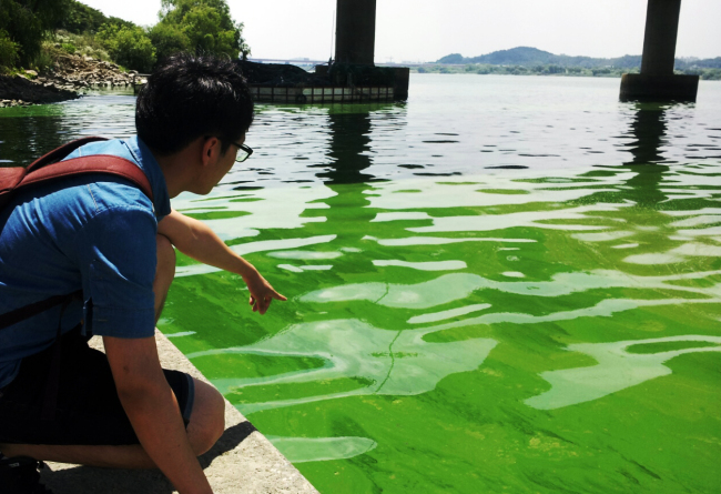 A man points at the green tide spread near Shingok weir in the Hangang River, where some fish were found dead, in Goyang, Gyeonggi Province, on June 28. (Yonhap)