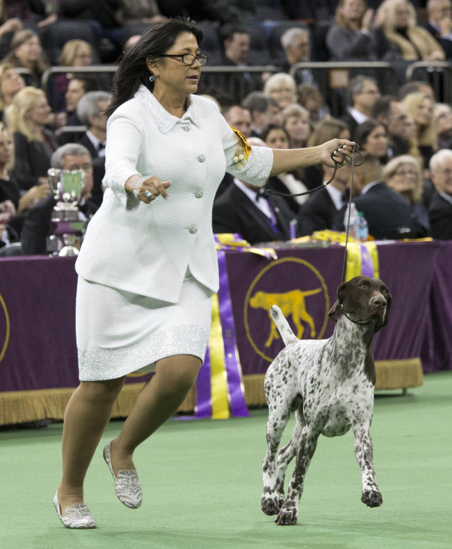 Temecula Dog Wins 'Best in Show' at 2016 Westminster Dog Show