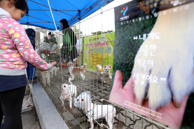 Seoul City is holding a pet adoption service every second and fourth Saturday, from this month to October, in conjunction with civic groups. (Yonhap)