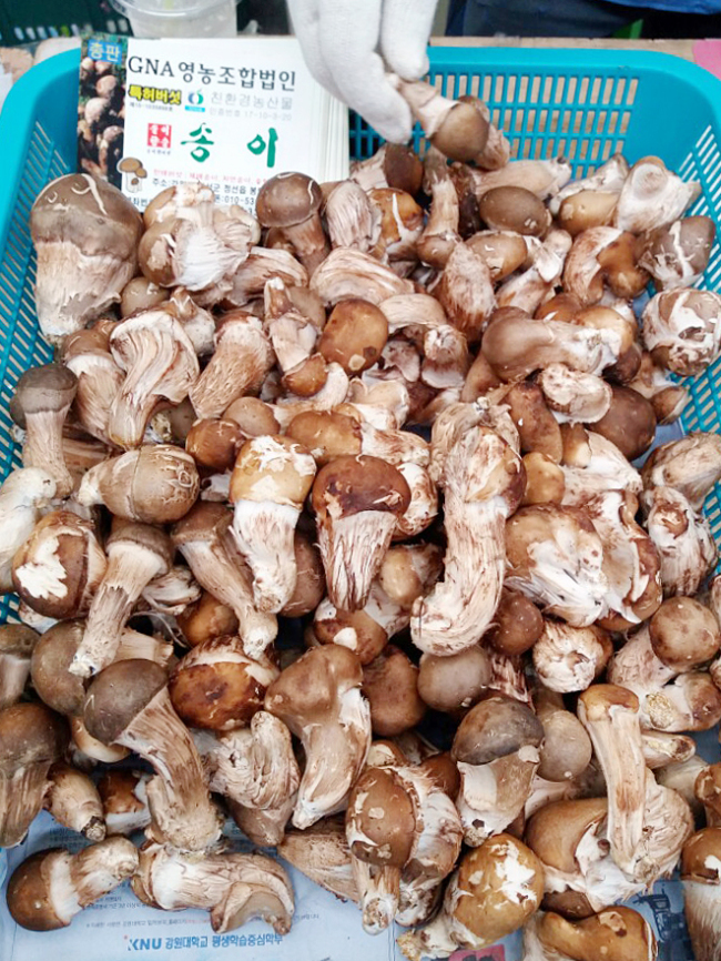A songi pine mushroom local delicacy is shown with an honest display of what a songi mushroom looks like compared to the widely available genetically modified version. (Christine Cho)