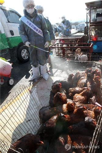 Photo dated March 12, 2012, shows sanitation workers disinfecting a livestock market in the city of Seongnam, south of Seoul, following reports that a suspected case of avian influenza had been found at a chicken farm in the central city of Gyeryong. (Yonhap)