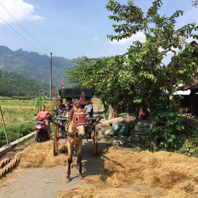 A horse carriage takes tourists around a traditional village near Borobudr Temple in Yokyakarta,Indonesia. (Ock Hyun-ju/The Korea Herald)