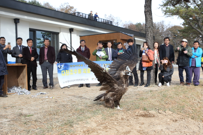 An eagle is released and tries to fly after his wounded leg is treated at the DMZ Peace Town for Migratory Birds in Cheorwon, Gangwon Province. At least 200 migratory birds are released after treatment in Cheorwon each year. (Cheorwon County)