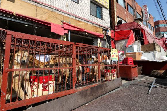 The Moran Dog Meat Market in Seongnam, Gyeonggi Province. (Yonhap)