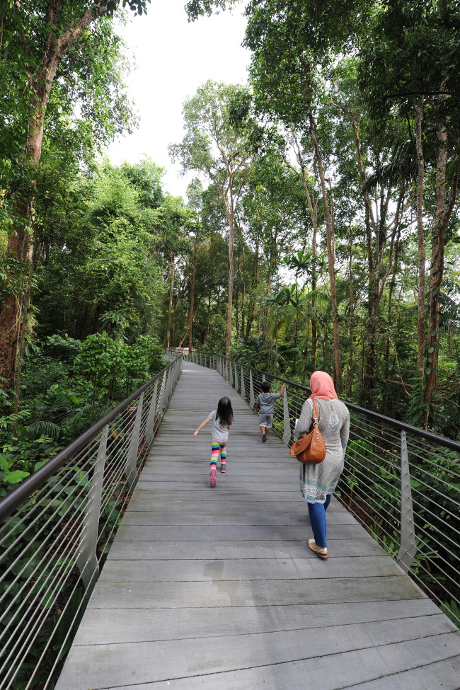 Exploring the elevated walkway in Singapore (NParks)