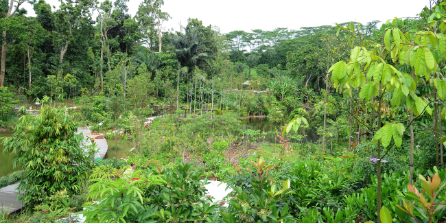 The Learning Forest at Singapore Botanic Gardens (NParks)