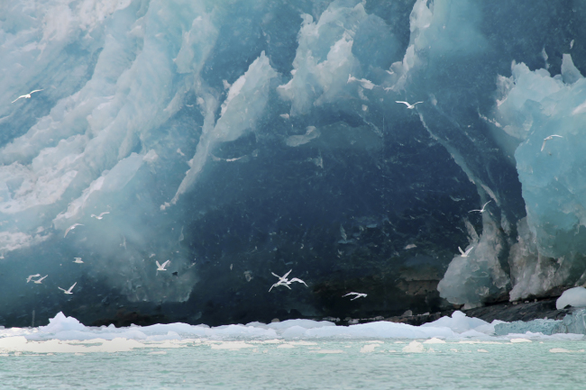 A photograph from the Arctic Impressions Photo Exhibit (Biosphere Environmental Education)