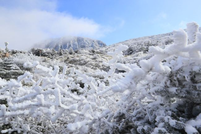 The white peaks of Hallasan attracted weekend hikers after receiving the first snowfall of the season early Saturday.(Yonhap)