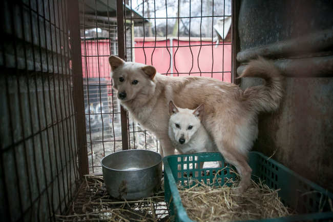 Dogs rescued by the Humane Society International in Korea (Humane Society International)
