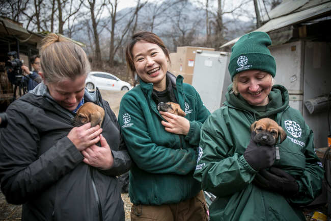 HSI staff rescue canines from a dog farm in Korea. (Humane Society International)