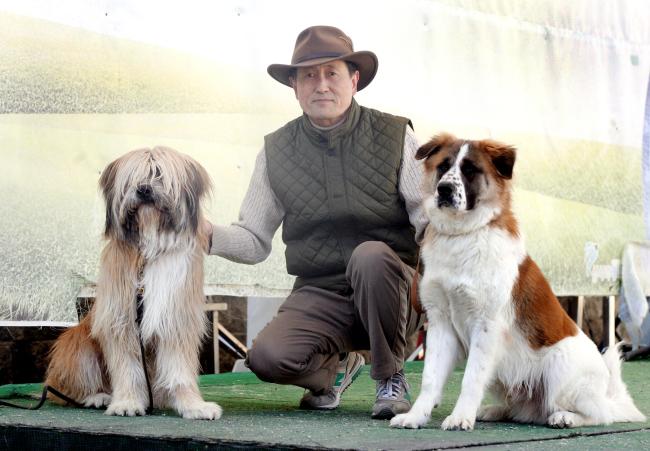 Dr. Ha Ji-hong (Center) with Sapsaree Dogs at Korea Sapsaree Foundation in Gyeongsan, North Gyeongsang Province (Park Hyun-koo/The Korea Herald)
