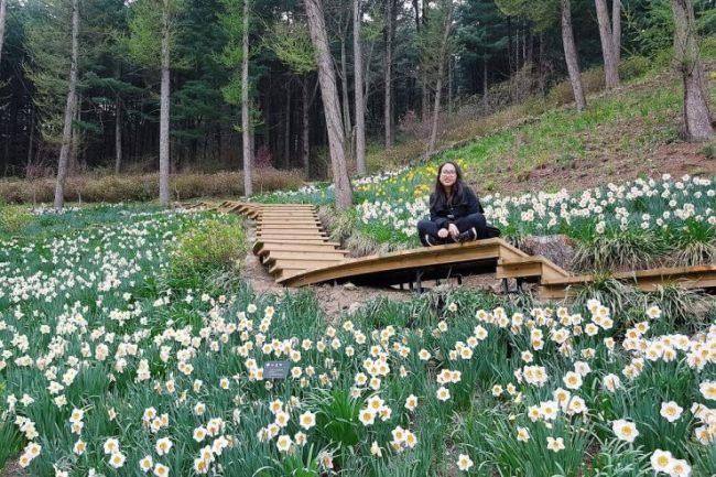 Jane Galvez in Gapyeong in April, 2017 (www.janegalvez.com)