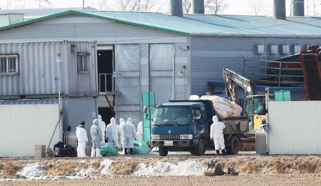 Quarantine officials cull chickens at a farm in Pyeongtaek, 70 kilometers south of Seoul, on Jan. 28, 2018, to contain the further spread of avian influenza. (Yonhap)