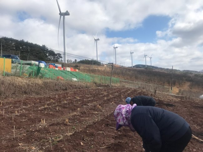 Cheon Seung-bun and her father-in-law cultivate their land across a series of wind turbines in Honggye-ri village. Bak Se-hwan/The Korea Herald
