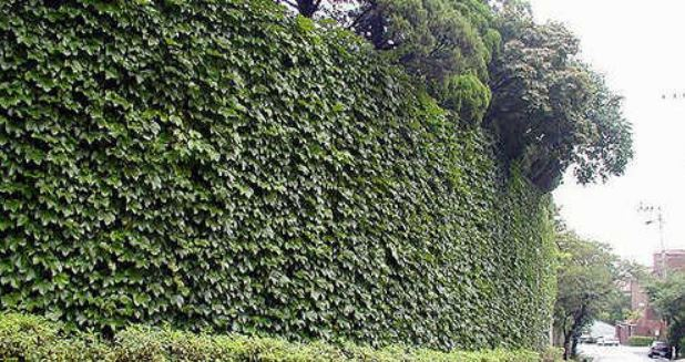 Pictured is an outer wall of a house with green curtains. (Yonhap)