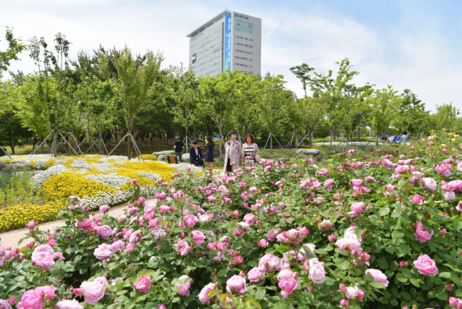 Roses are in full bloom at the Gwangju City Hall garden on May 14. (Yonhap)