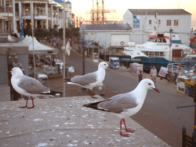 The harbor front at Cape Town (Joel Lee/The Korea Herald)