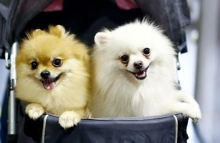 Many pets in Korea have grown old. (Yonhap)
